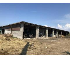 Fosta ferma bovine - Satu Mare